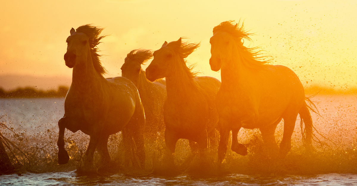 silhouette of four wild horses running with sunset in background, four horsemen of the apocalypse