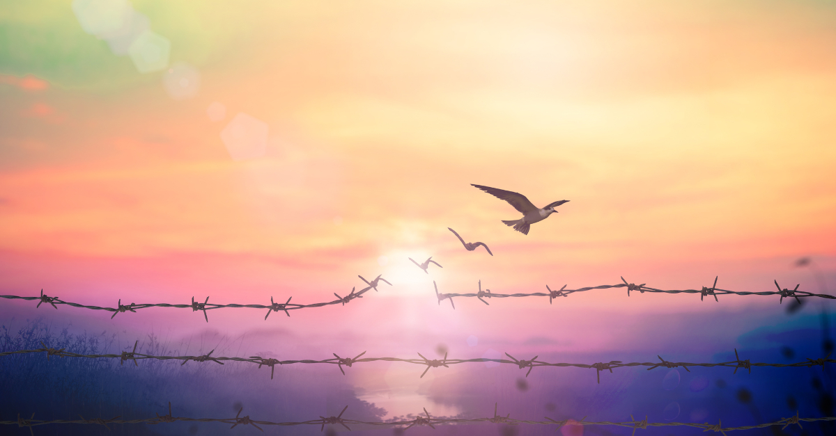 freedom redemption from a reprobate mind birds breaking through barbed wire
