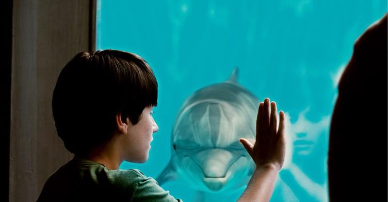 7. <em>Dolphin Tale</em> (Peacock TV)