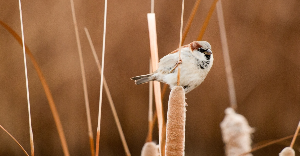 """8. """"His Eye is on the Sparrow"""" by Civilla D Martin"""