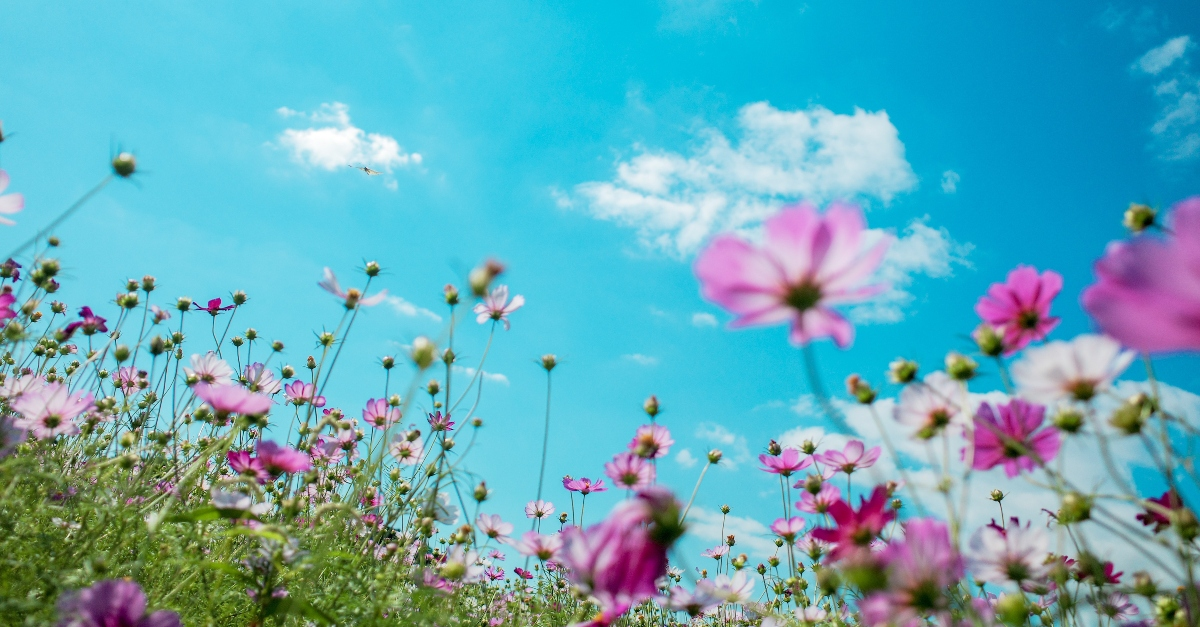 field of wildflowers looking up at sky, flipping the switch