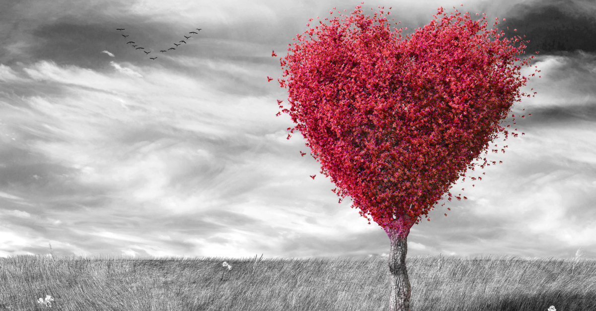 red heart shaped tree on black and white landscape the Lord Is Close to the Brokenhearted