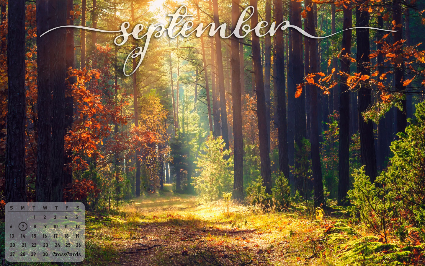 September 2020 - Woods mobile phone wallpaper