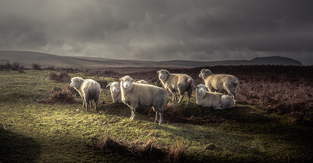 Lesson #1: Protect the Flock (1 Timothy 1)