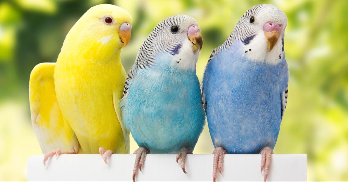 Three different birds sitting on a coffee mug