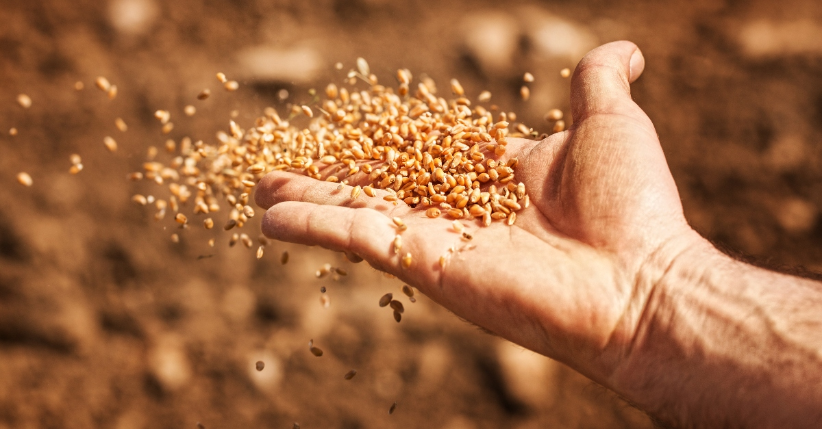 Why Did Jesus Tell Parables Like the Parable of the Sower?