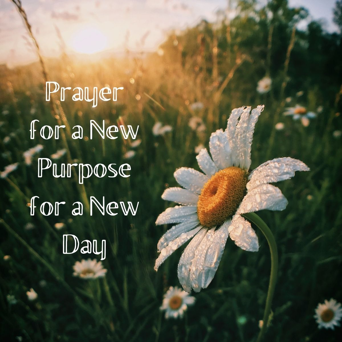 flower meadow title image for prayer for new purpose new day