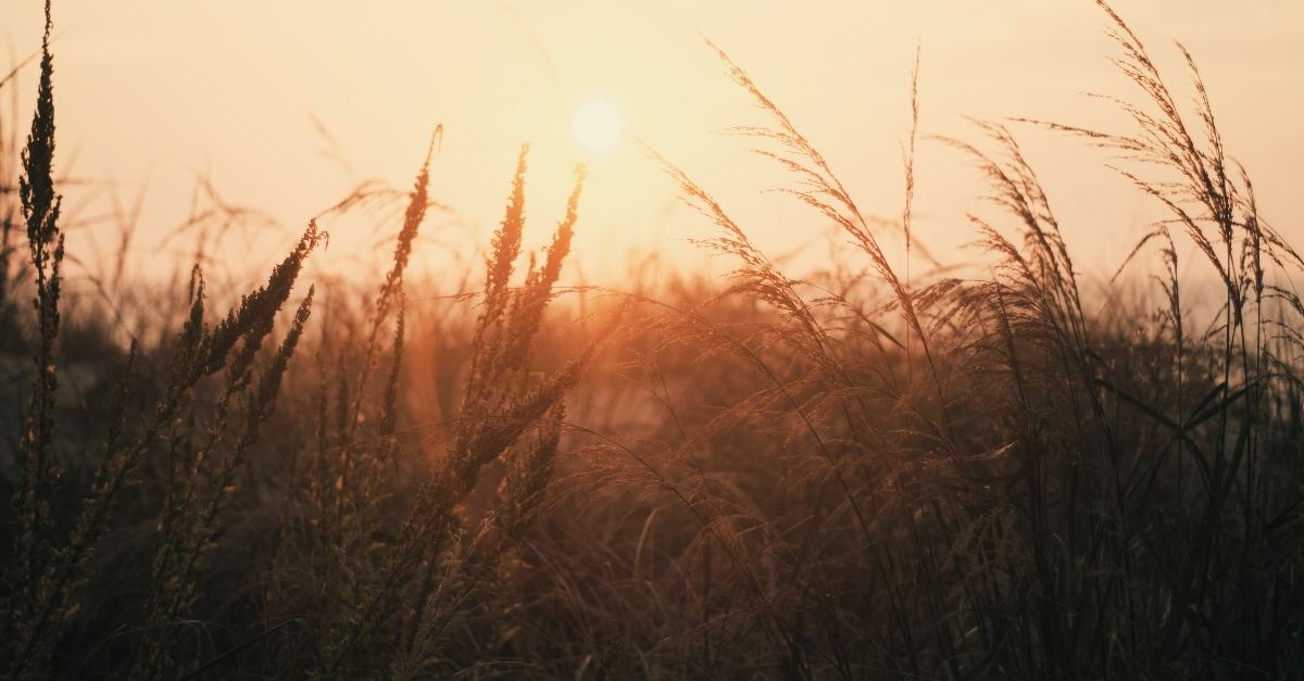 sunrise over grassy wheat field, prayer for new purpose new day