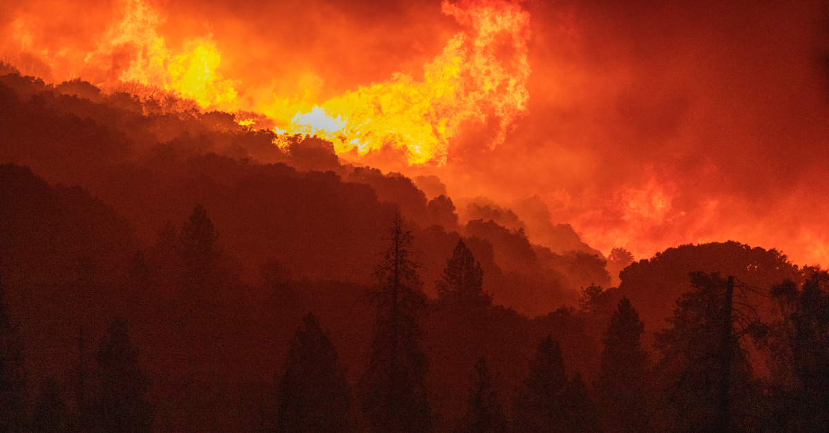 A wildfire burning a California forest, Wildfires ravage California