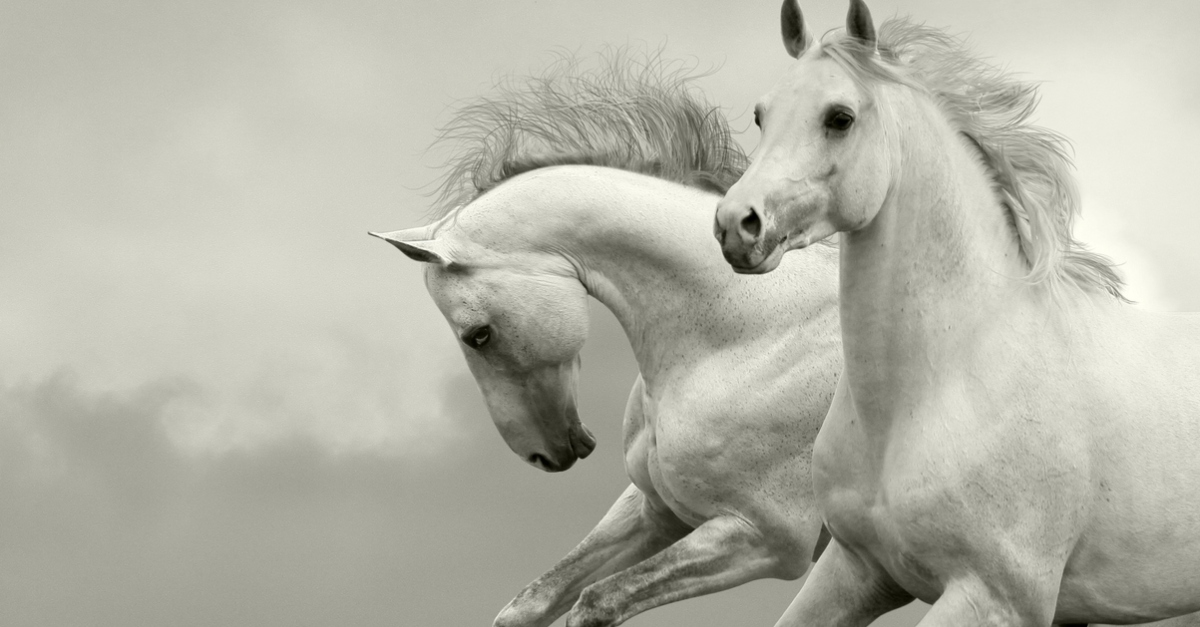 two white horses galloping white horse in revelation - book of revelation explained