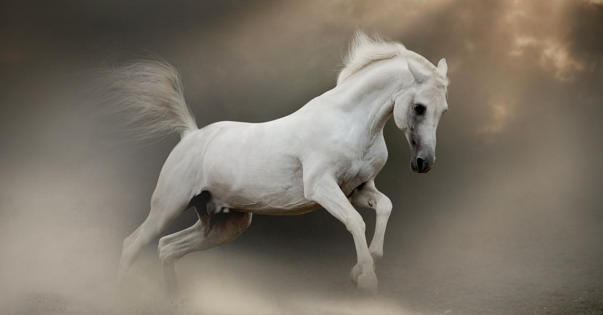 white horse in revelation