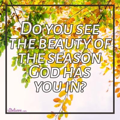 beautiful season, inspirational image
