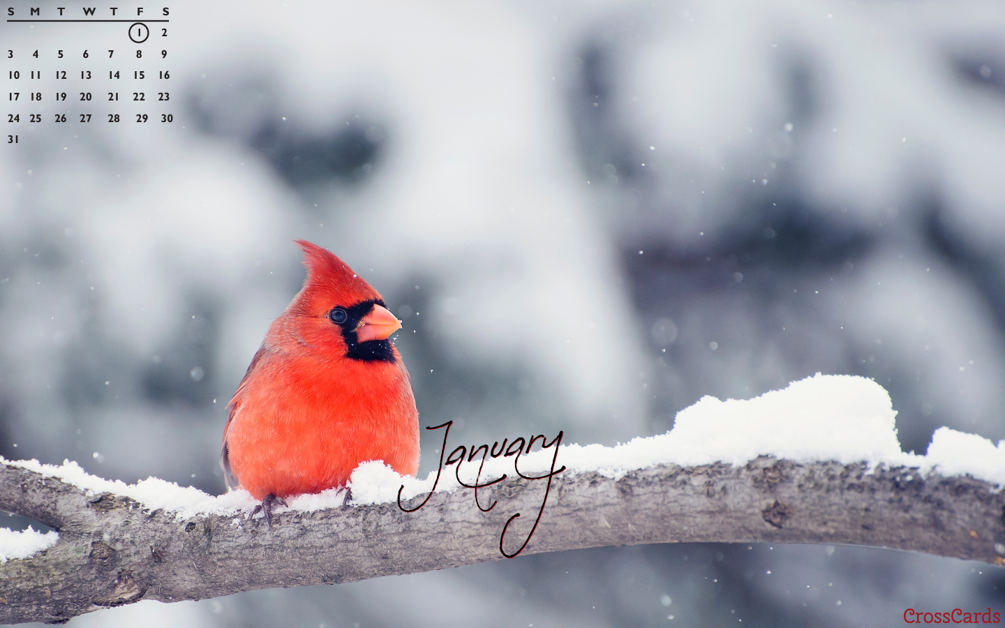 January 2021 - Cardinal in the Snow mobile phone wallpaper