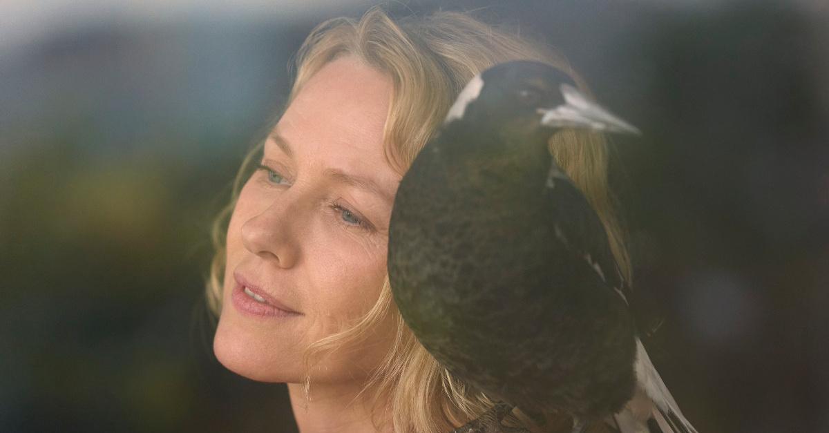 Magpie on Sams shoulder in Penguin Bloom