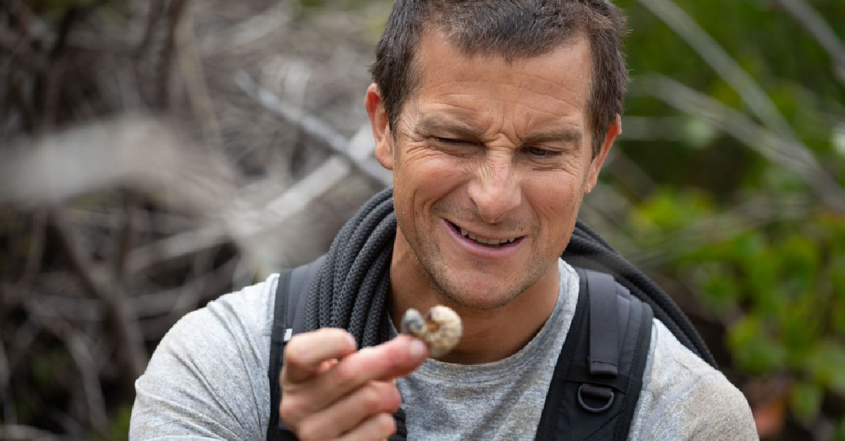 Animals on the Loose