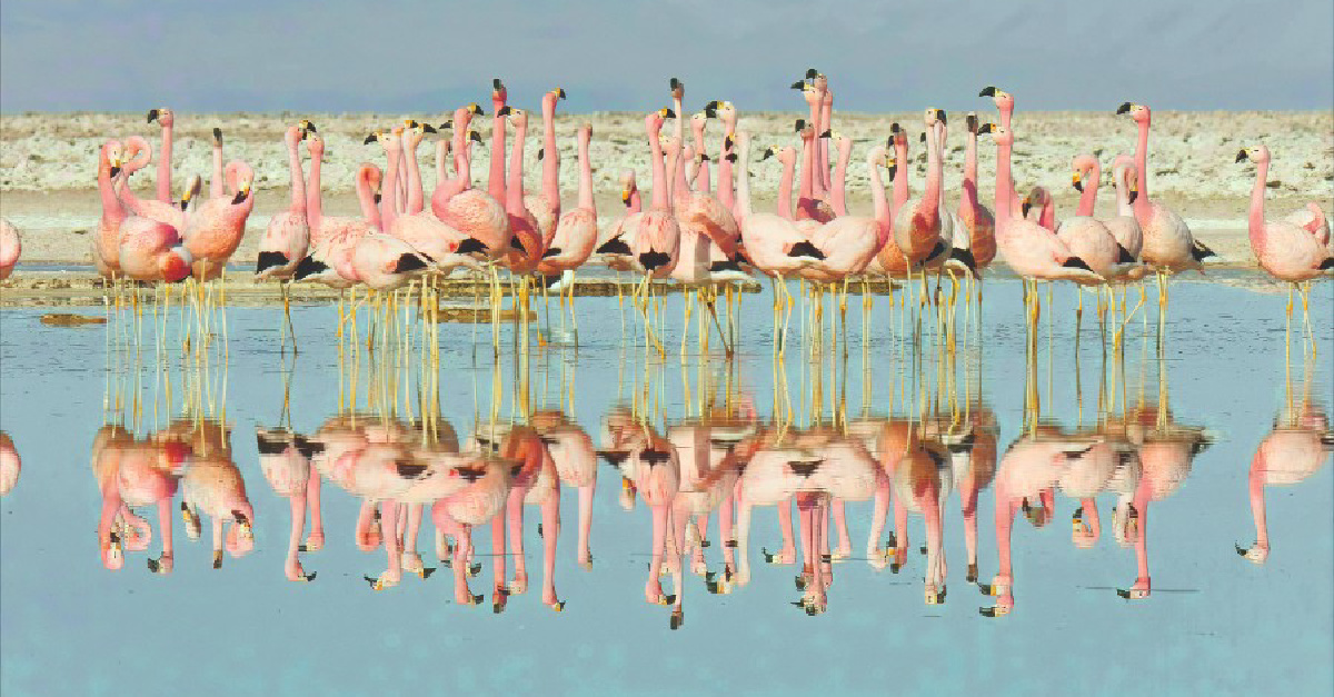 Life in Color, Flamingos