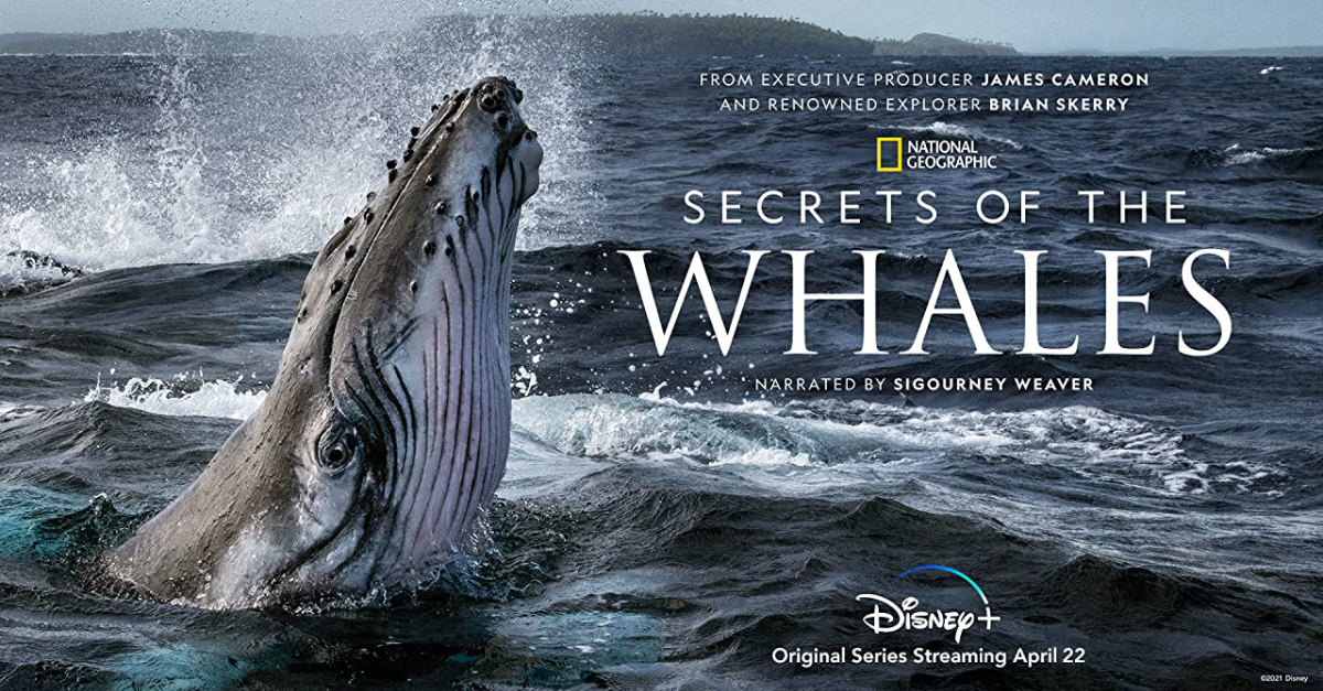 Secret of the Whales poster