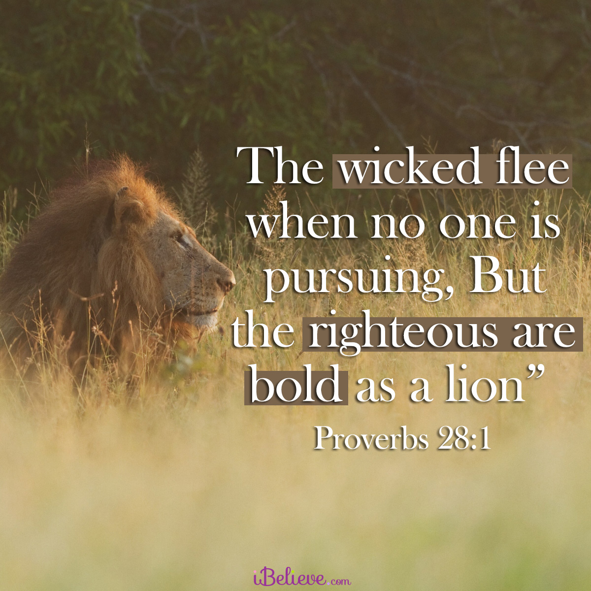 Proverbs 28:1, inspirational image