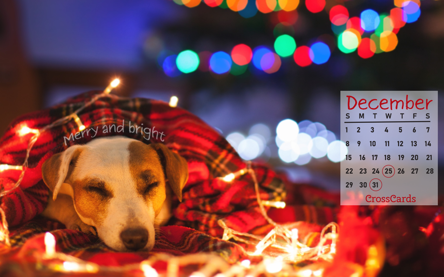December 2019 - Christmas Lights ecard, online card