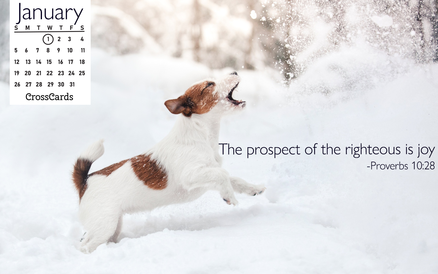January 2020 - Snow Dog ecard, online card