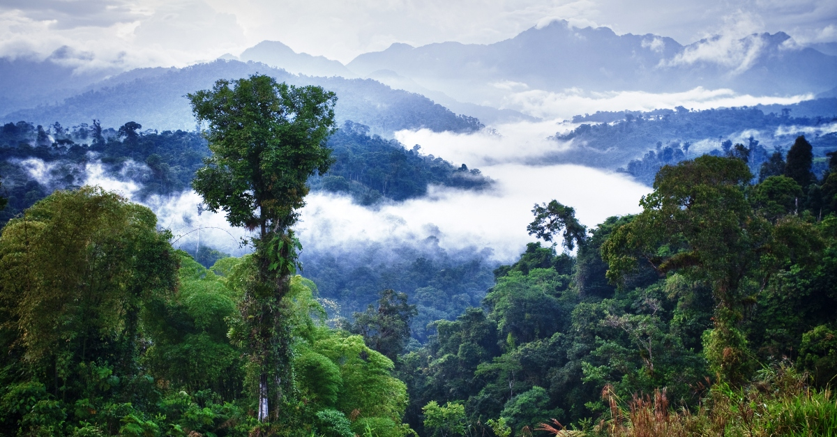 Who Were the Five Missionaries Who Died in the Ecuador Jungle?