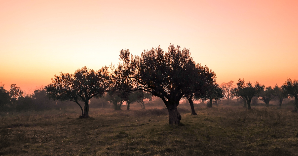 Why Is the Garden of Gethsemane so Crucial to Jesus' Life?