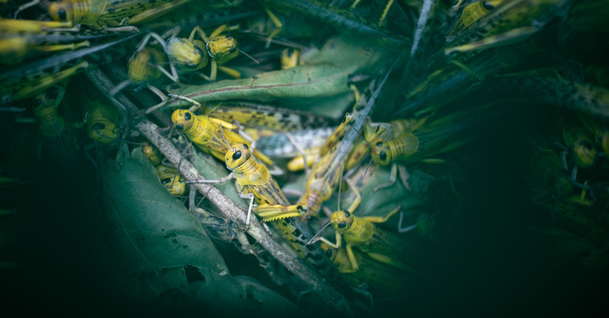 The Plague of Locusts, and What Christians Can (and Must) Do