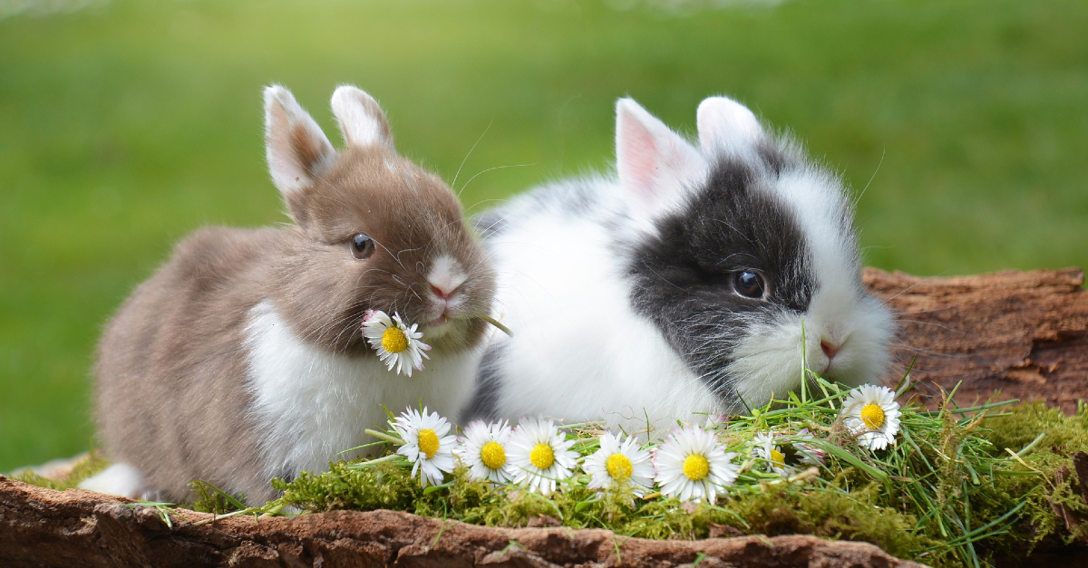 Is it OK for My Child to Believe in the Easter Bunny?