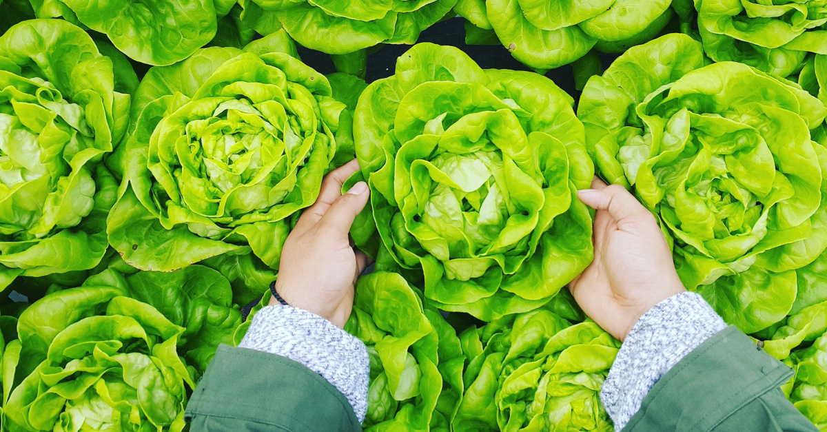Running into the Coronavirus Crisis with Lettuce and Love: So, What's in Your Hand?
